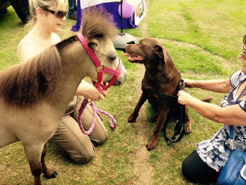 Boo our Pony - Pet Therapy